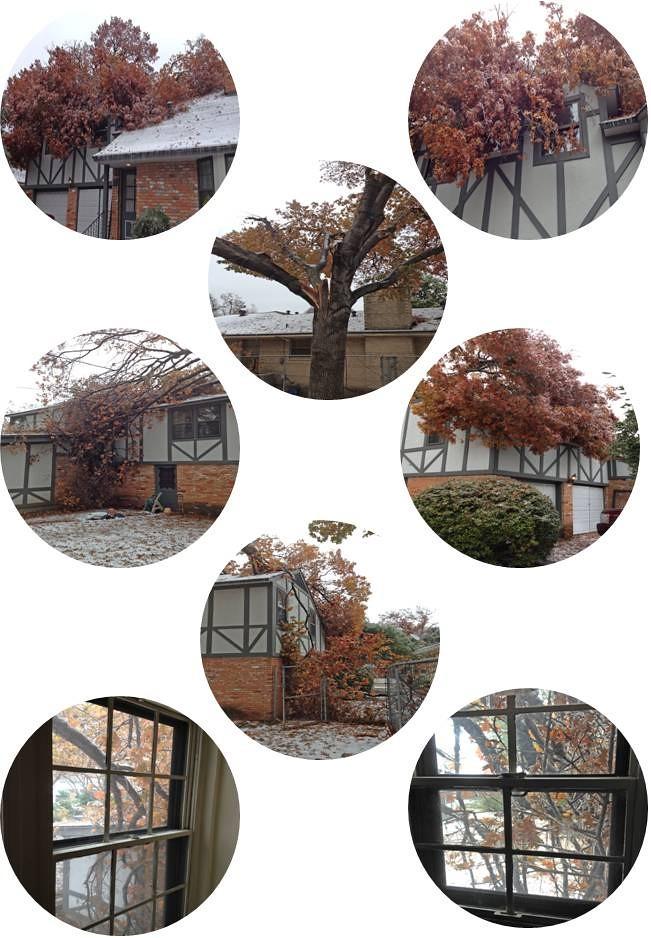 images of fallen tree