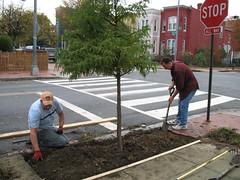 Treeplanting.JPG