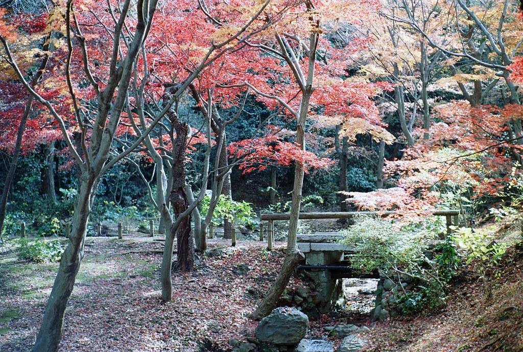 Sankeien in autumn