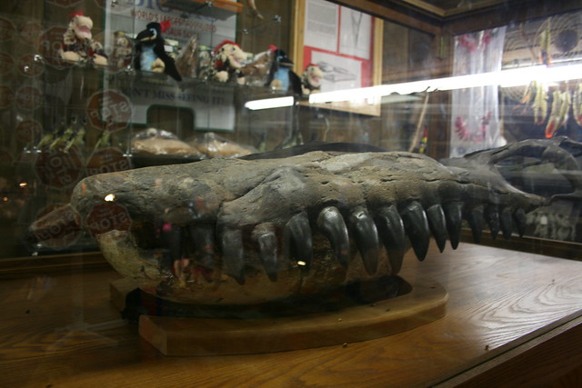 Big Mo mosasaur fossil at Big Mike's Mystery House in Cave City, Kentucky