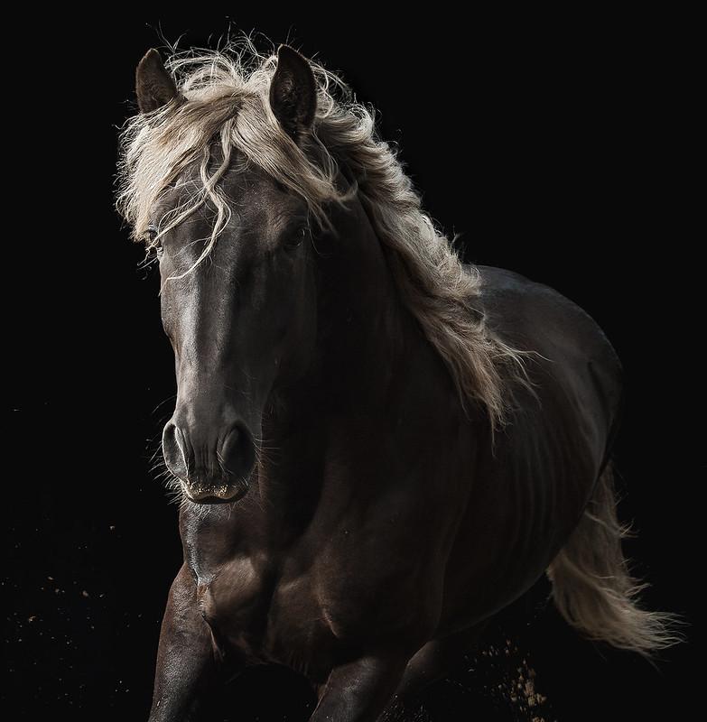horse_A.P