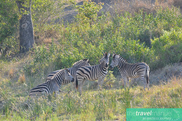 Creatures of the Kruger National Park