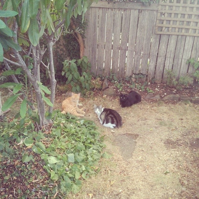 "I thought ""how cute, the cats are having a little gathering in the garden!"", then I realised they were congregating to share a tiny dead bird... #atticuskitty #tintinkitty #mescakitty"