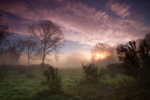 Ranmore Common Sunrise Mist