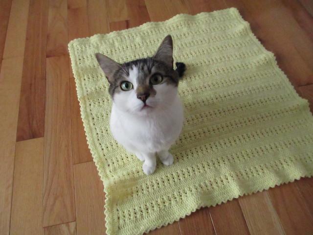 Penny's blanket