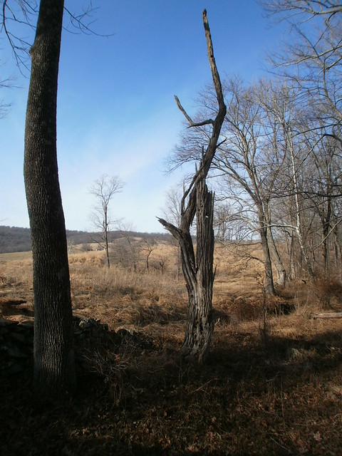 Sky Meadows State Park on January 13.