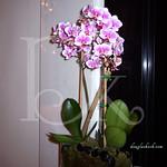 Lobby-Orchids