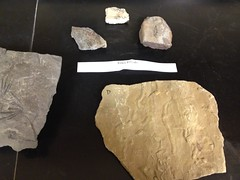 floor(0.0), art(0.0), wood(0.0), stone tool(0.0), mineral(1.0), rock(1.0),