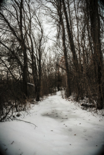 trees winter snow cold nature path wintersky winterpath winterscenery johnstonwarmemorialpark