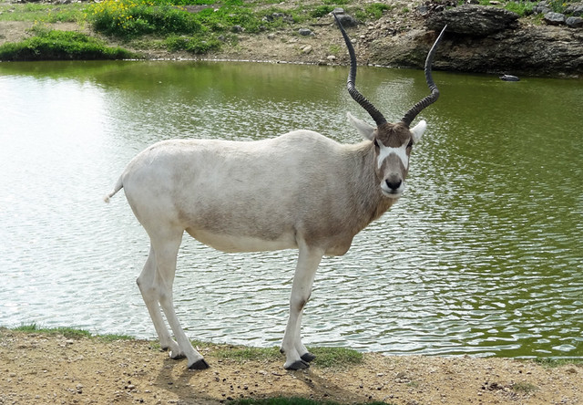 natural bridge wildlife ranch drive thru zoo