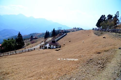 清境農場(80)