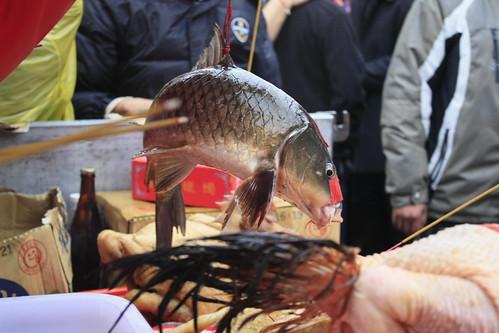 魚也是脊椎動物,應受動物保護法保護。但神豬展示現場,經常見到吊掛活魚,不斷張嘴希望獲得氧氣,最後只能窒息而亡。(圖片:台灣動物社會研究會)
