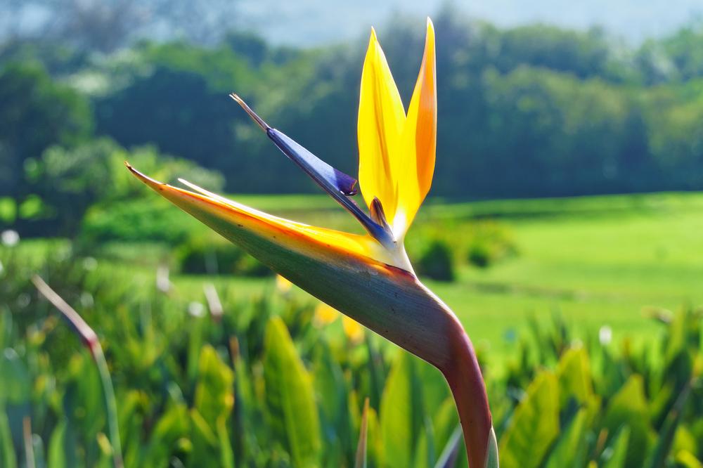 Kirtsenbosch flora