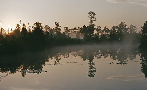 morning trees sky sun mist reflection film water misty fog analog forest sunrise 35mm palms campus outdoors dawn scans pentax florida k1000 foggy silouette scan dew swamp backlit radiant ucf humid folliage orland mornig scanfromfilm scansfromfilm