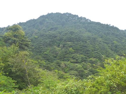Jiangxi-Sanqing Shan-3 sentier du soleil (1)