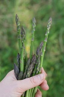 Asparagus Spring 2014