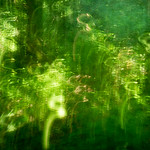 ICM in the woods