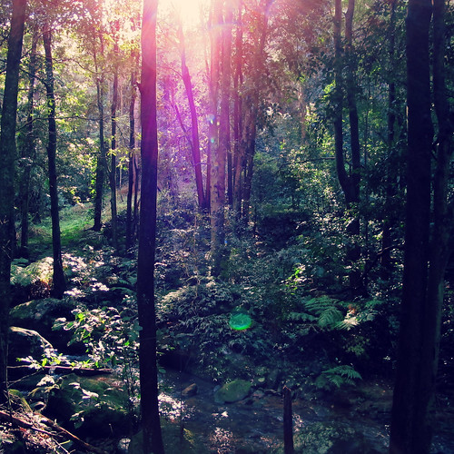 Forest Filter