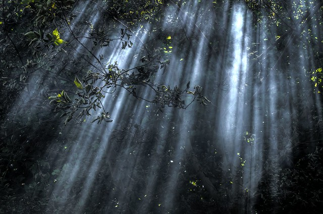 Beams of light 1