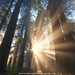Light be with you - Redwood National Park - Crescent City, CA by JaveFoto