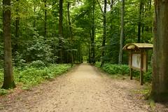 Chemin typique de la forêt de Soignes