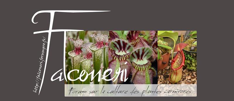 Forum sur les plantes carnivores