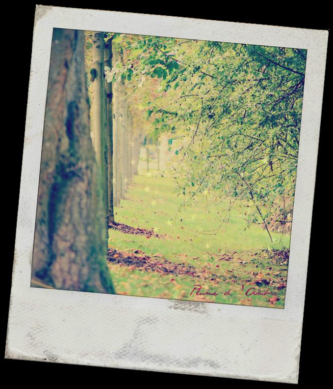 Randée d'arbres