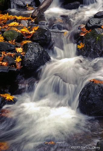 gary quay garylquay film kodak foolscape imagery sinar starvation creek falls starvationcreekfalls columbia gorge columbiagorge oregon waterfall fall autumn