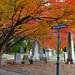 Green-Wood: Fall 2013