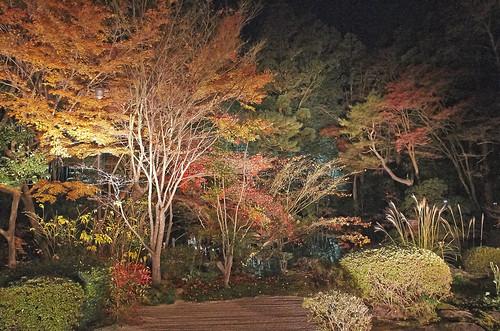 【写真】2013 紅葉 : 天授庵/2020-05-17/IMGP3737