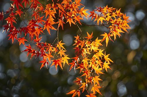 【写真】2013 紅葉 : 上御霊神社/2020-07-01/IMGP4186