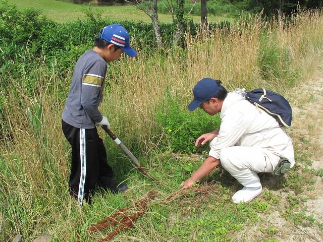草本は根から掘り取る.