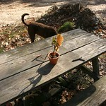Flower on a picnic table with dog tail