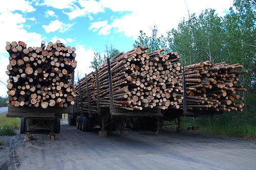 Logging Trucks in 70 Mile House, Highway 97, Cariboo, British Columbia, Canada