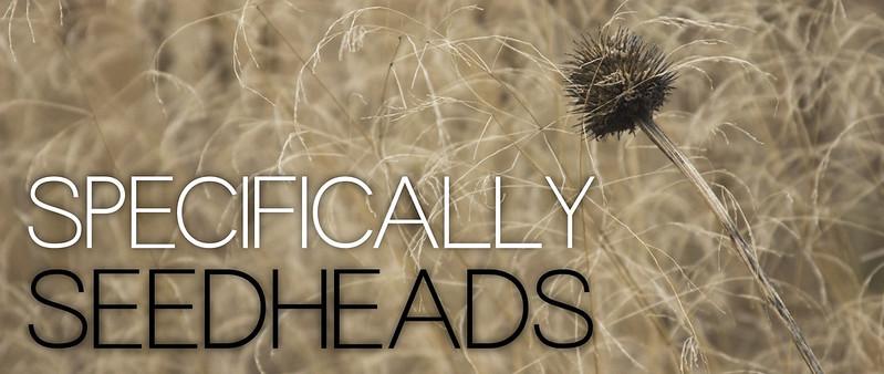 Seedhead Header