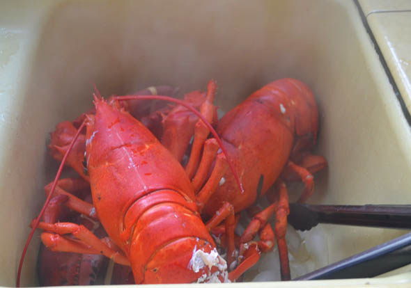 Julia Child's Lobster Thermidor via LittleFerraroKitchen.com