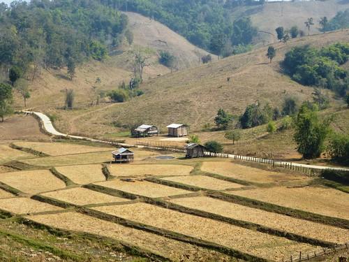 Th-Um Phang -Mototaxi (20)