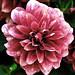 Flower by apple371