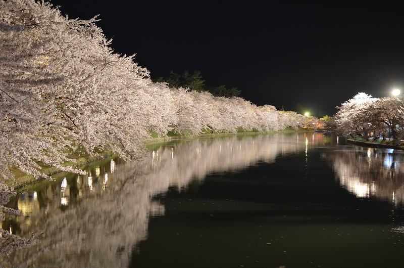 弘前さくらまつり festival of cherry blossoms at Hirosaki 2014年4月29日