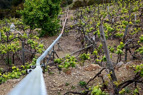 Vineyard track