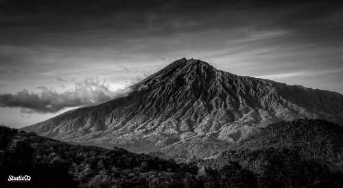 africa trees sky blackandwhite mountain tanzania arusha