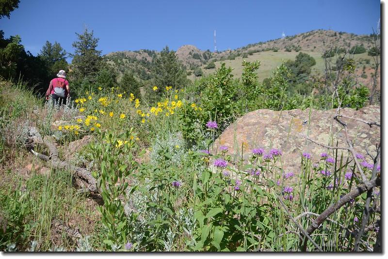 Red Rocks Trail 9