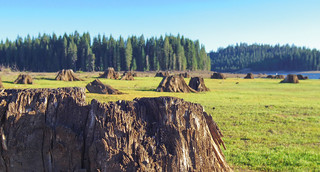 Trees and Stumps