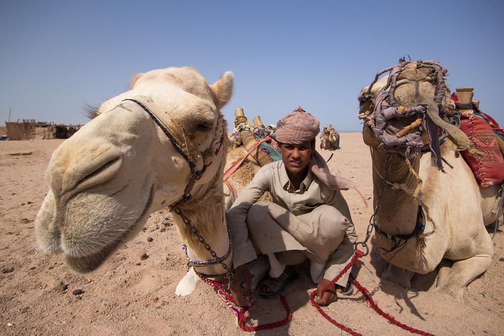 Camel King