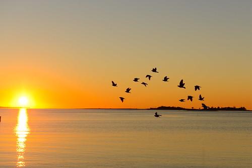 summer beach birds sunrise