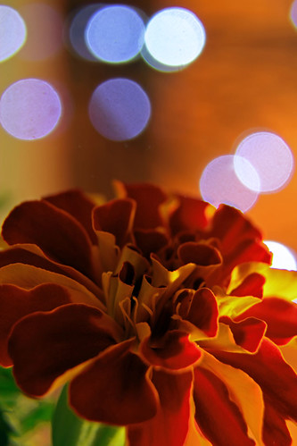 Week 33 in 2013 - Bokeh by MichEric248