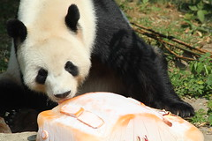 Tian Tian's 16th Birthday Celebration