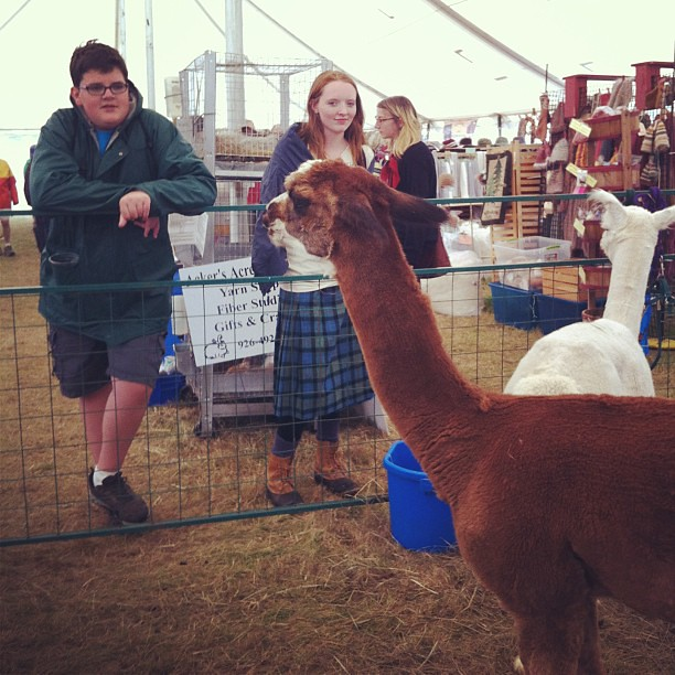 Talking to cranky alpacas at the fair. #commonground #cgcf2013