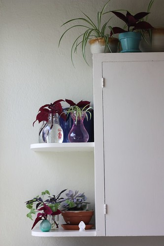 Plant Cuttings in Kitchen