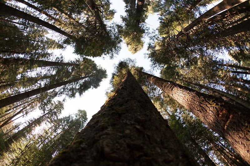 Forest_Oakhurst, CA_G.LHeureux-1418